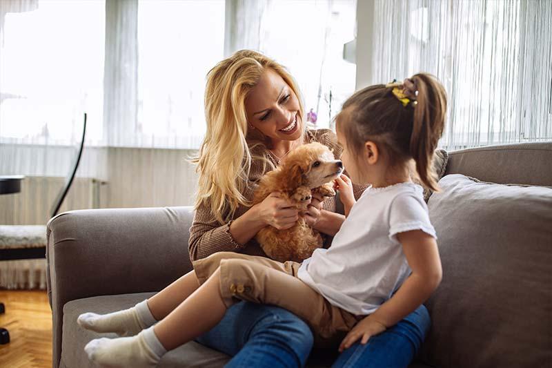 Poodle dog licks little girl