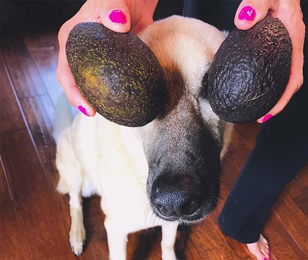 Dog with avocado over eyes