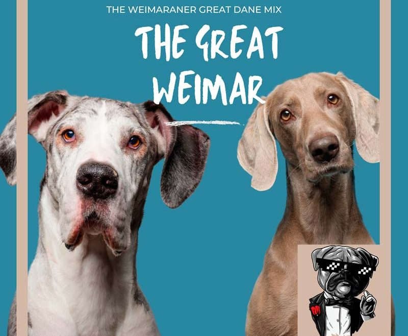 The great weimar dogs