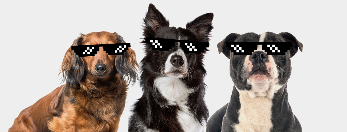 3 thug dogs cover image