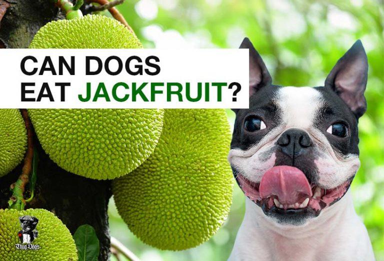 Can dogs eat jackfruit?