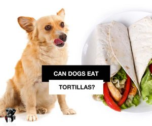 Can dogs eat tortillas or even tortilla chips?