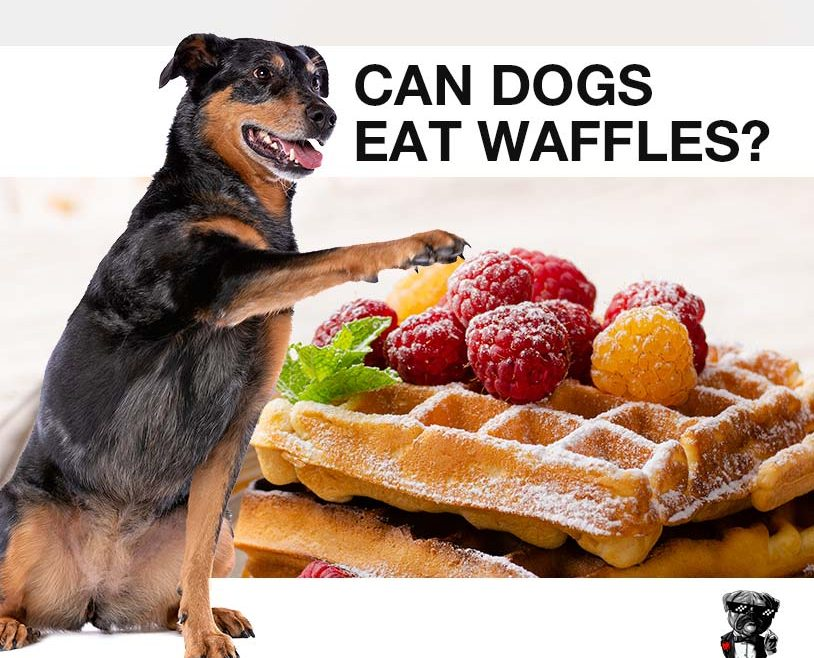 Can dogs eat waffles?