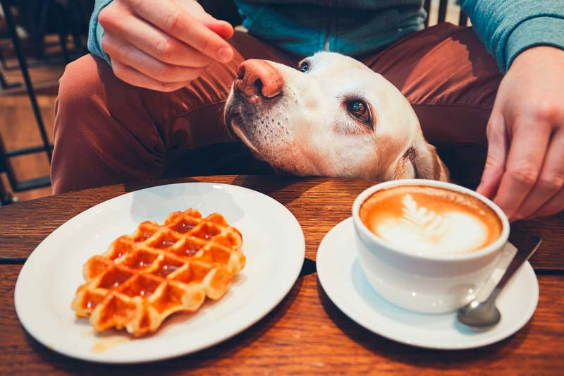 Dog tries to eat waffle