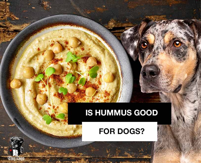 Is hummus good for dogs? Can dogs eat hummus?