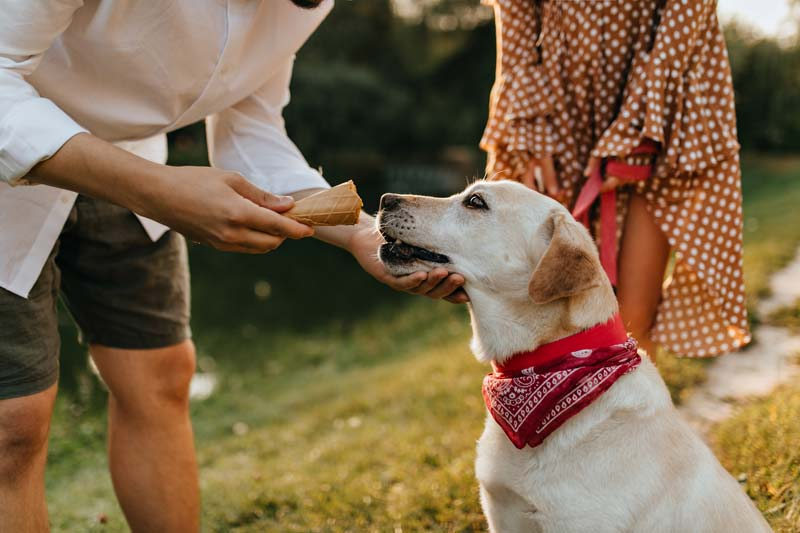 Man gives his dog waffle cone