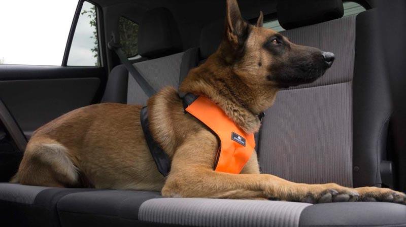 Sleepypod dog car safety dog seat belt harness