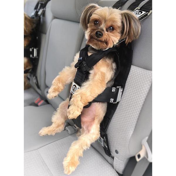 ZuGoPet safety dog harness for dog seat belt