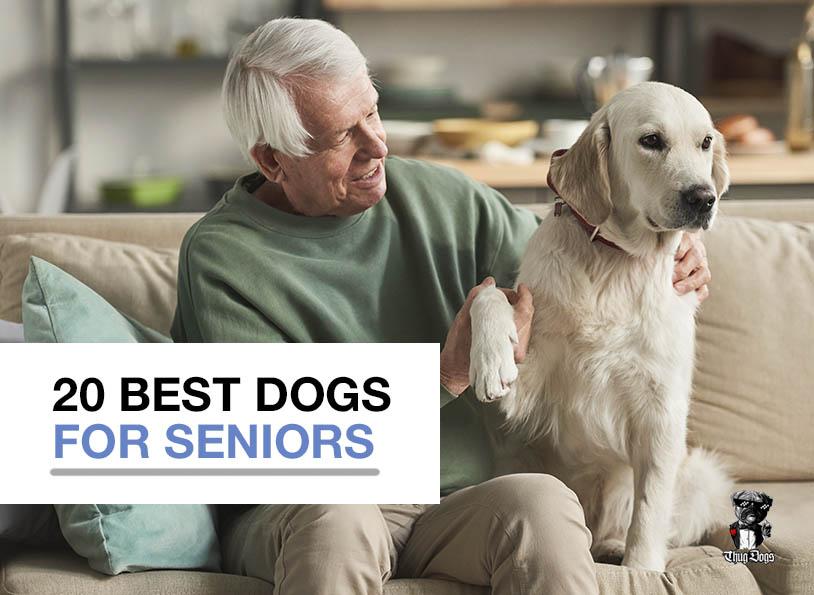 20 best dogs for seniors
