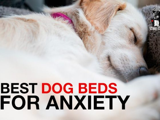 TOP 10 Best Dog Beds for Anxiety