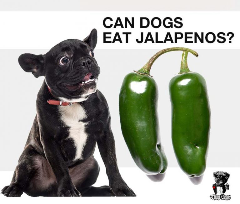 Can dogs eat jalapenos?