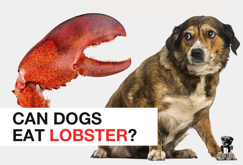 Can dogs eat lobster?