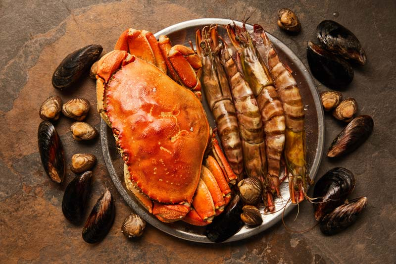 Can dogs eat shellfish?