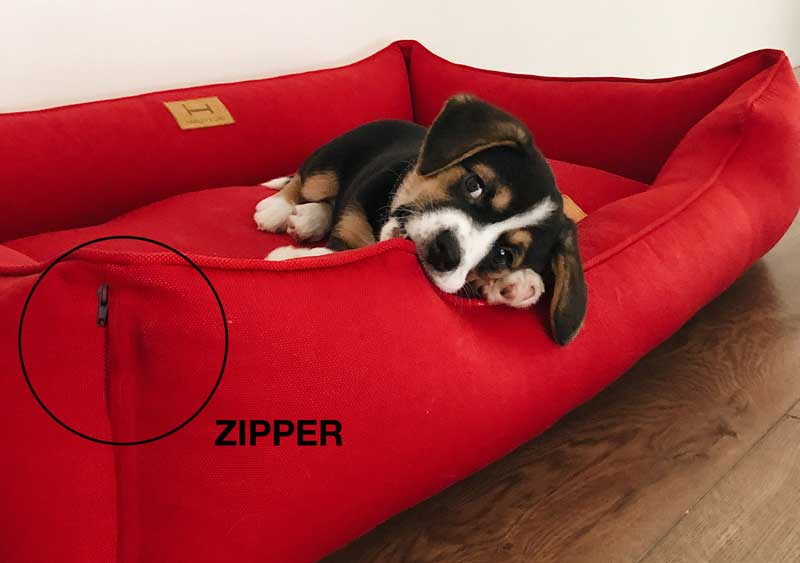 Dog lying in bed with zipper
