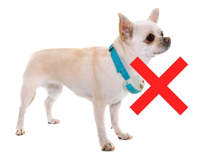 Don't train your dog with shock collar