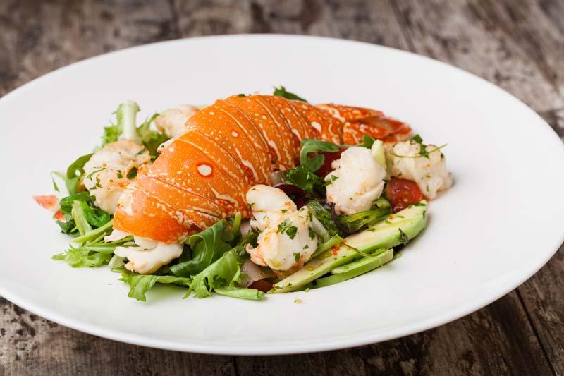 Lobster salad suitable for dog