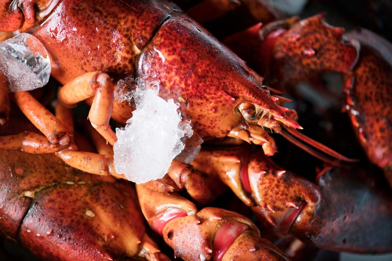 Lobster shell can be dangerous for dogs