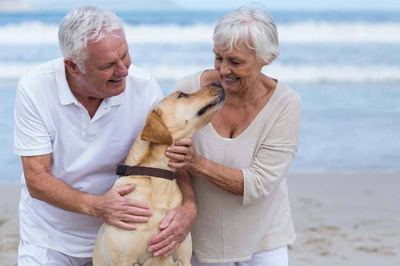 Senior couple playing with their dog on the beach