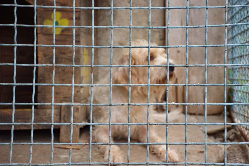 Shelter dog adopted for seniors