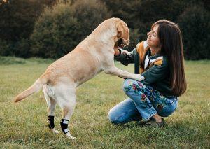 NeoAlly super supportive dog brace