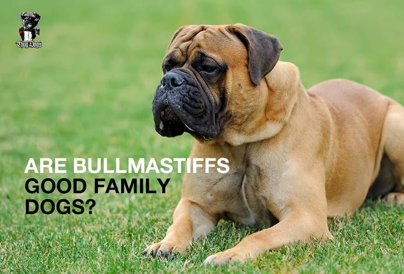 Are Bullmastiffs good family dogs?