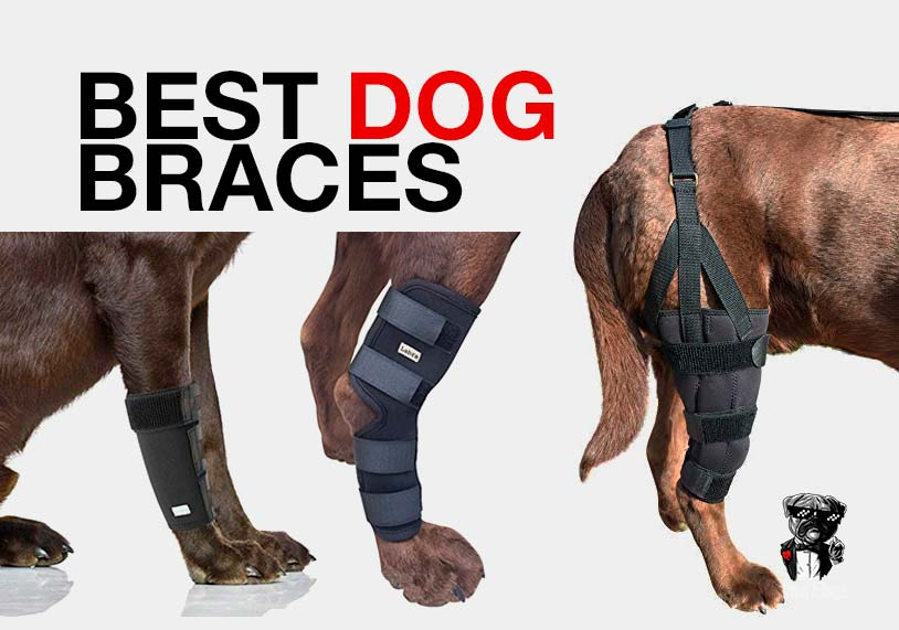 Best dog braces buying guide
