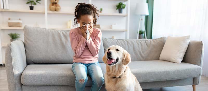Dog allergy - allergy to dogs furr