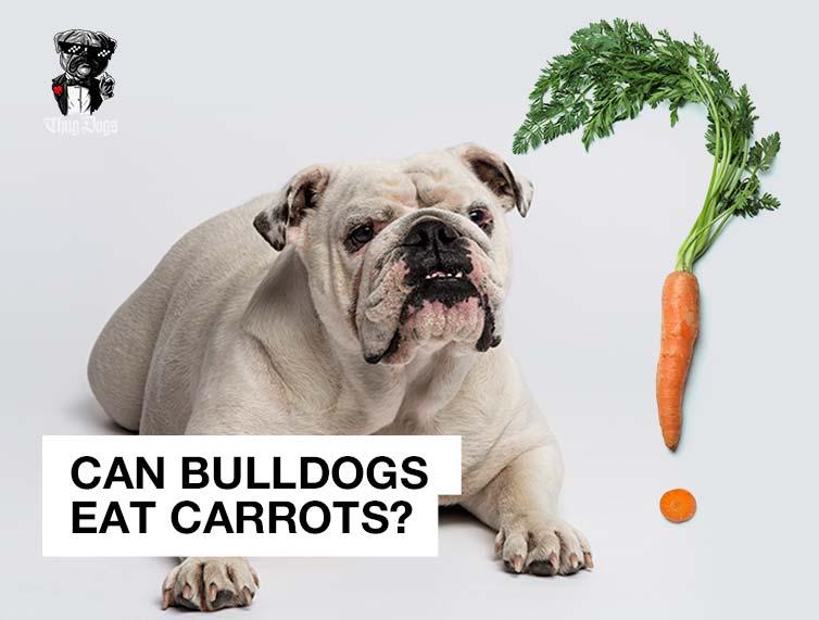 Can Bulldogs eat carrots?
