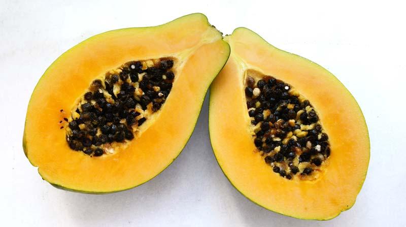 Can dogs eat fresh papaya?